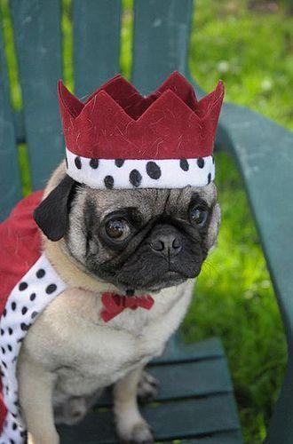 Hail The King C Maude Tag A Dog Lover 3 Pug Pugs