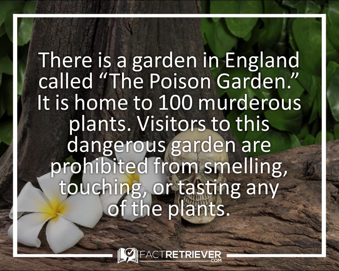 52 Interesting Facts About Gardening Factretriever Com Poison Garden Fun Facts Facts