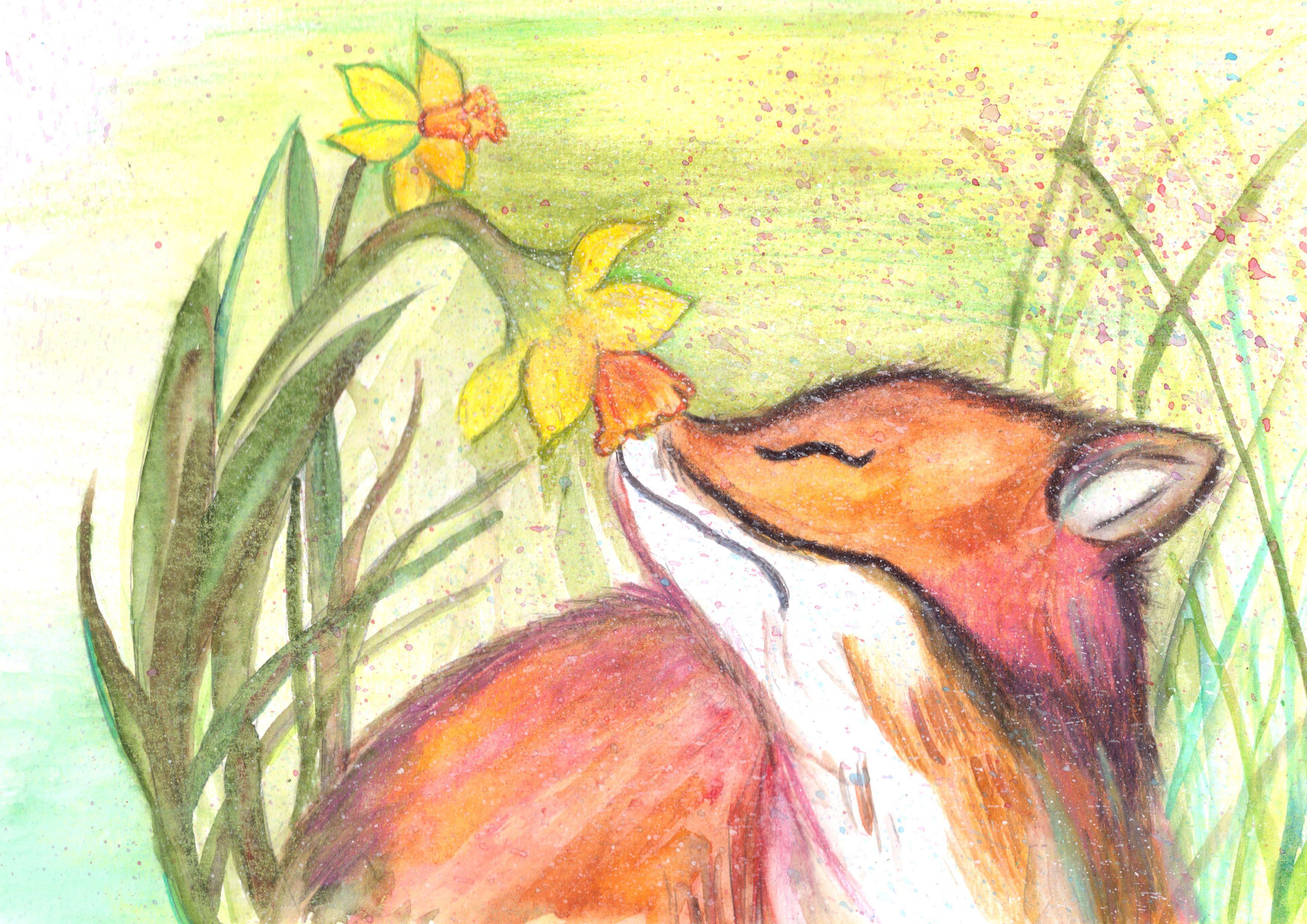 Grain rain red fox and daffodil inspiration by matt in flickr