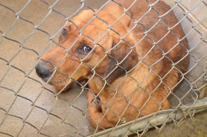Urgent Georgia Shelter Dog - Please Foster - Sponsor - Share