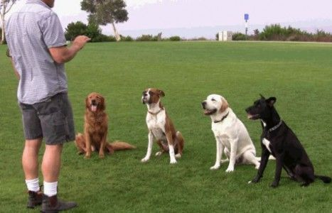Dog Training How To Train Your Dog Facts And Tips Dog Training