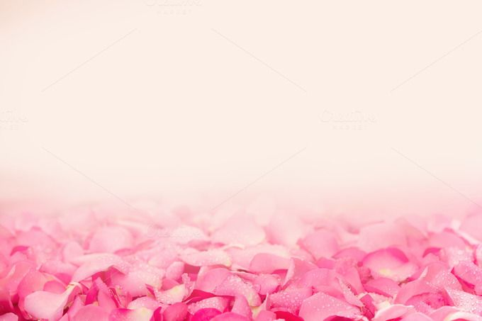Pink Rose Petal Abstract Background Abstract Backgrounds Rose Petals Floral Border