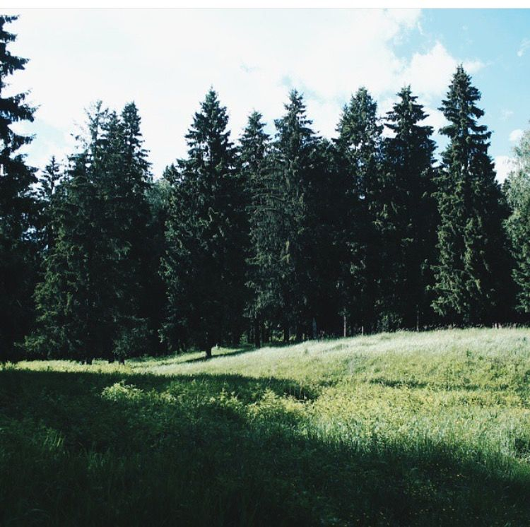 Foregrounds, background, lines from top of trees Natural