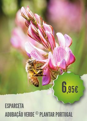Esparceta - A Esparceta, Onobrychis Viciifolia, é ideal para a adubação verde e…