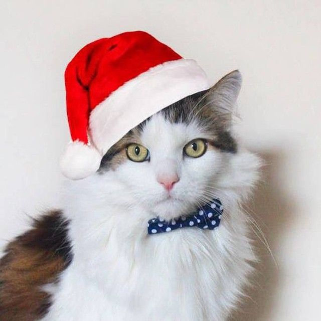 holiday kitty!