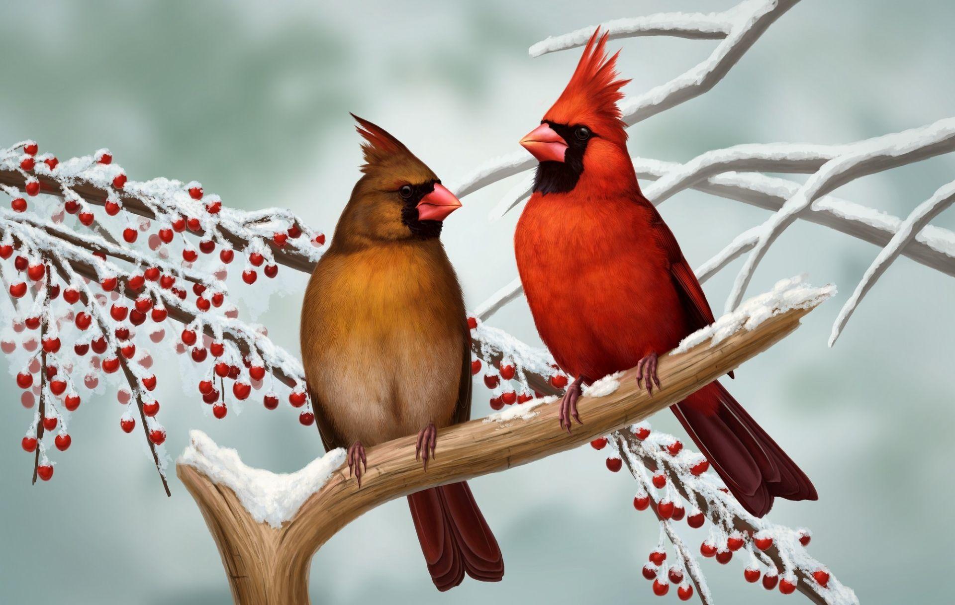 Animal Cardinal Northern Cardinal Bird Winter Couple Woman Man Wallpaper Cardinal Birds Diamond Painting Beautiful Birds