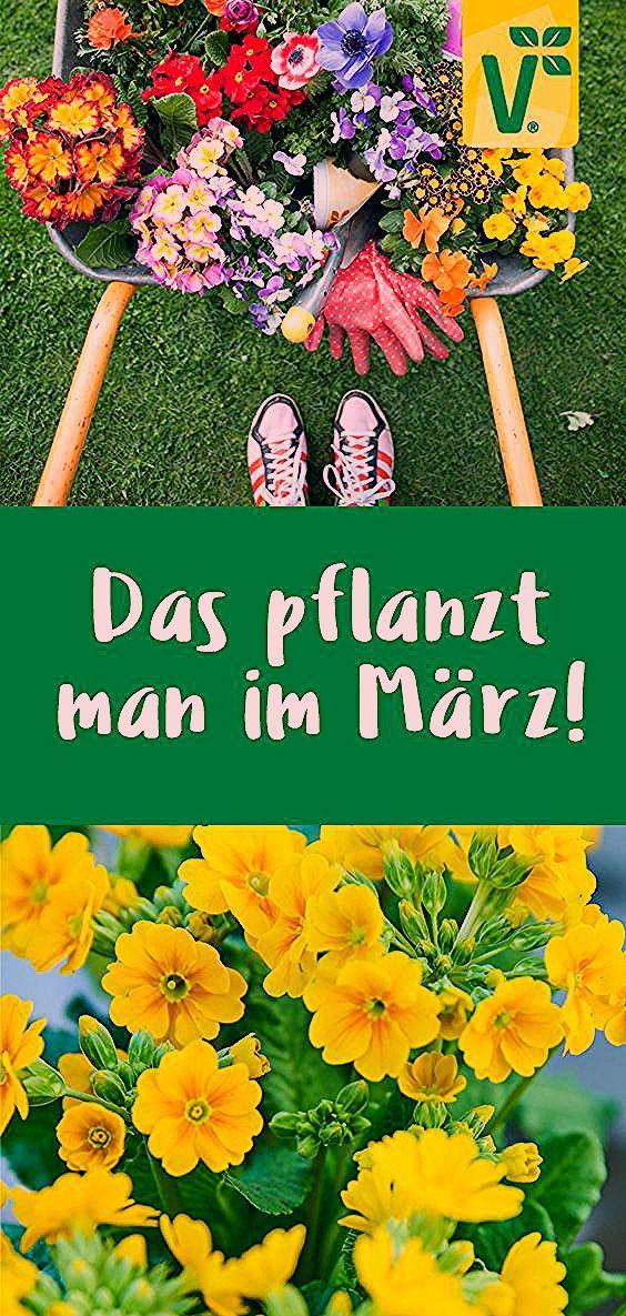 Photo of Was pflanze ich im März?