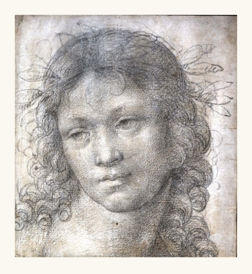 Study of the Head of a Boy Crowned with Laurel by Lorenzo di Credi