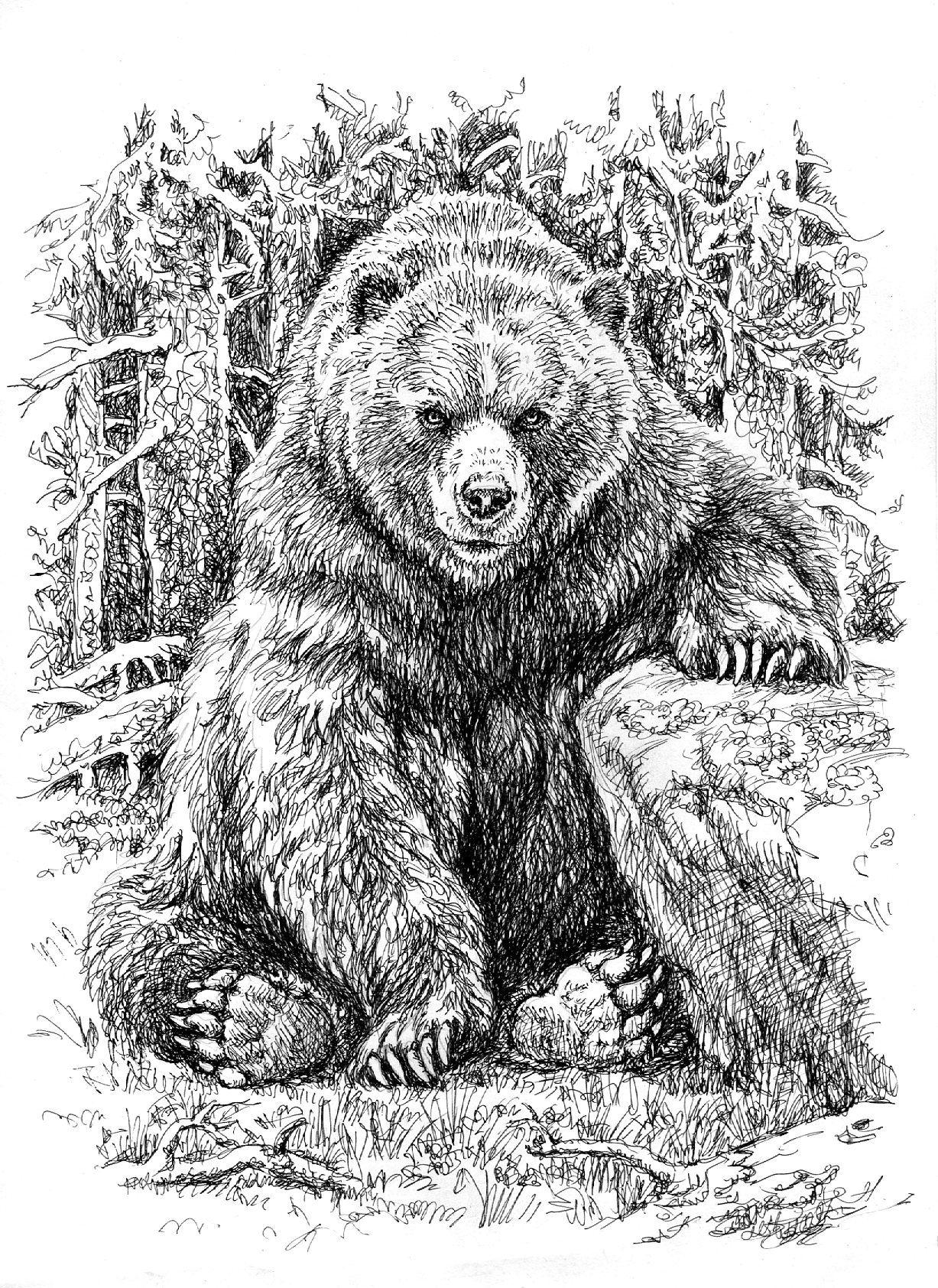 Тату медведя картинки