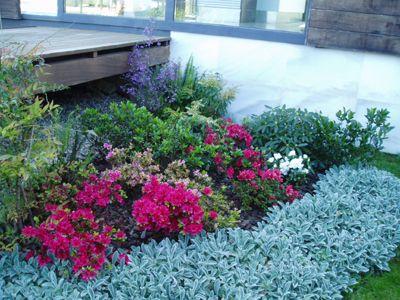 Plantas para Jardines Secos - Para Más Información Ingresa en   - plantas para jardin