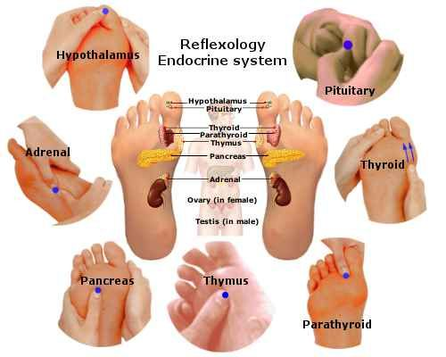 what comprises the endocrine system