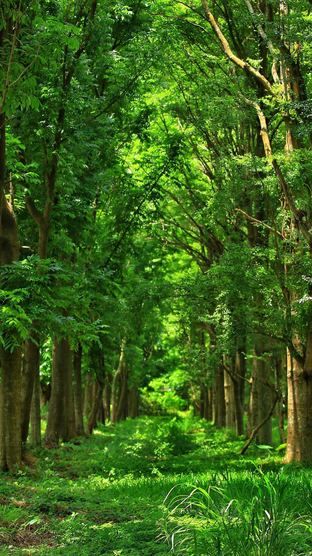 20 Forest Wallpaper Phone Backgrounds Hd Image For Free Download Green Nature Wallpaper Cool Pictures Of Nature Forest Wallpaper