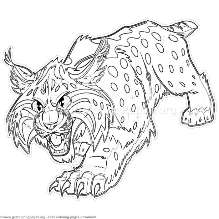 Cartoon Bobcat Or Wildcat Coloring Pages Free Instant Download