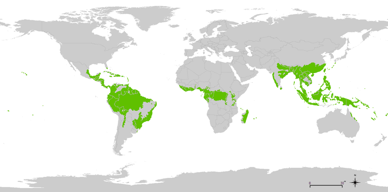800px tropical wet forests tropical rainforest wikipedia world distribution of tropical rainforests gumiabroncs Images