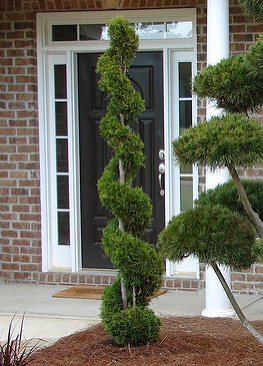 Emerald Green Arborvitae Spiral Vegetable Garden Design