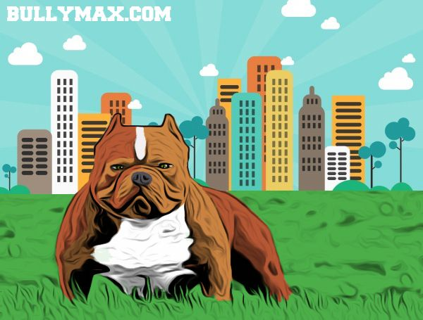 Pitbull Cartoon From Www Bullymax Com American Bully Pitbull