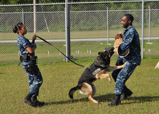 A Sailor Commands Police Dog Mickey To Attack Dogs Police