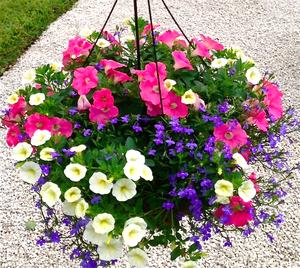 Plantas y consejos para crear cestas colgantes canastas y for Jardines caseros colgantes