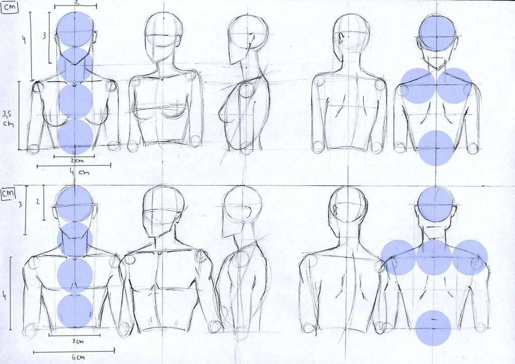 Female And Male Anatomy Proportions Head And Torso By Lucis7 Human Figure Drawing Female Anatomy Reference Neck Drawing