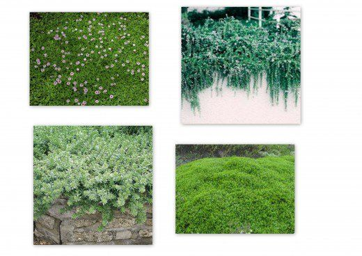 Best Plants And Erosion Controls For Slopes And Hillsides Steep Hillside Landscaping Erosion Control Cool Plants
