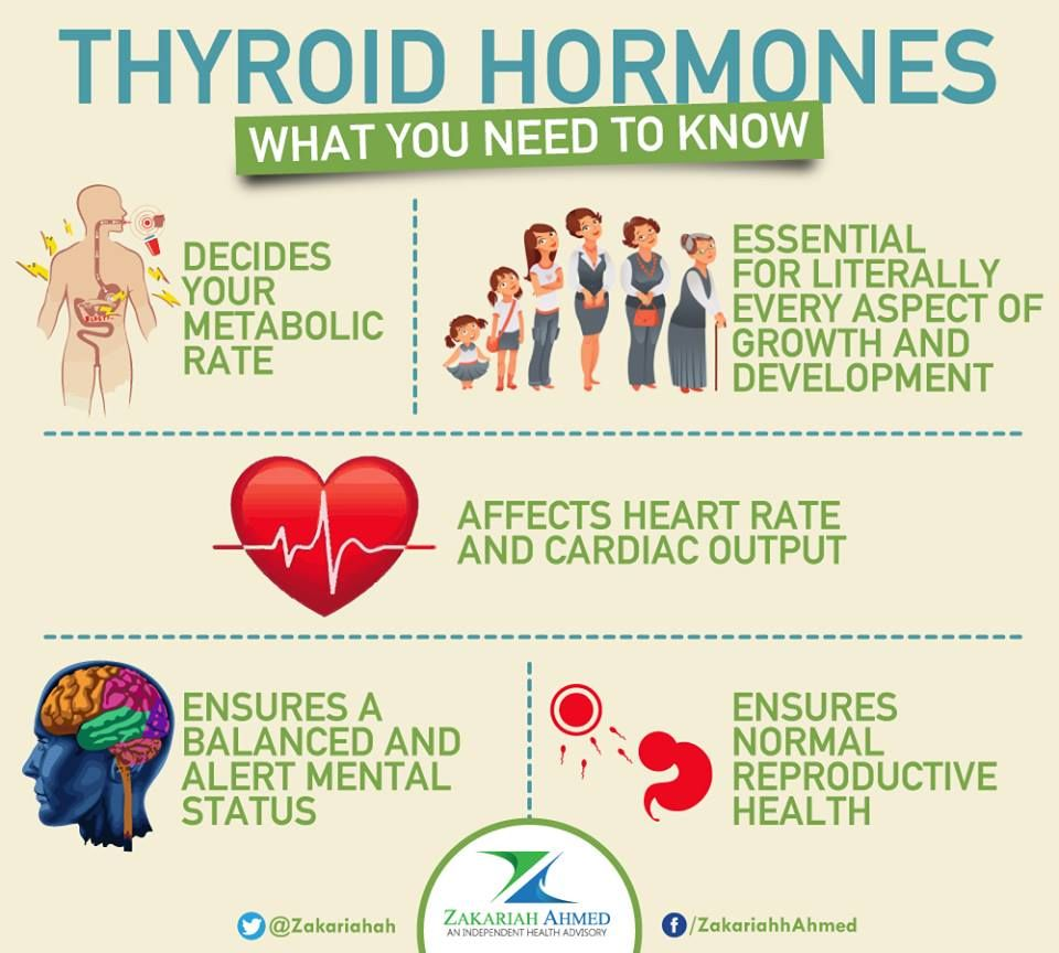 The thyroid gland, located in the front of your neck, is a deceptively small organ - but it is the master of metabolism. The thyroid controls every function in your body and a slight imbalance in the function will essentially throw you off balance!  Thyroid hormones: - Decide your metabolic rate - how fast or how slow your body works! - Are absolutely essential for every aspect of growth and development! - Affect heart rate and cardiac output!  #Health#Healthcare
