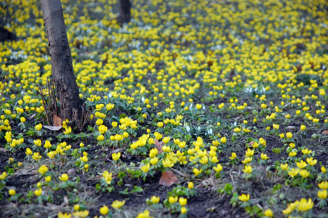 Pin by misty gorley on spring pinterest yellow spring flowers yellow spring flowers in forest small yellow flowers in a forest mightylinksfo Image collections