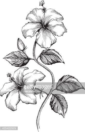 Hibiscus Ink Style Vector Drawing Tatoo Mer Iles