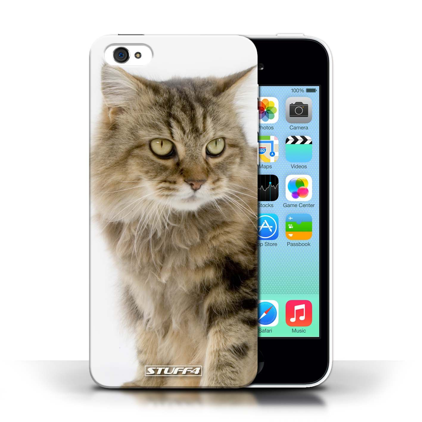 Protective Hard Back Case for Apple iPhone 5C / Cat Breeds
