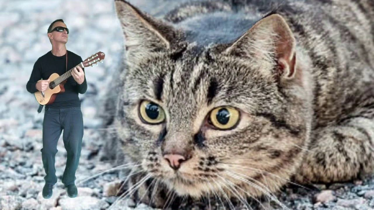 Man Plays Ukulele While A Giant Tabby Cat Sings Blondie S One Way