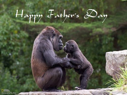 Beautiful Animals Wishes Wallpaper On Father S Day Animals Beautiful Monkey Pictures Animals