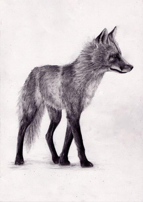 Tumblr Sketches Animals Google Search Art Fox Drawing Tumblr