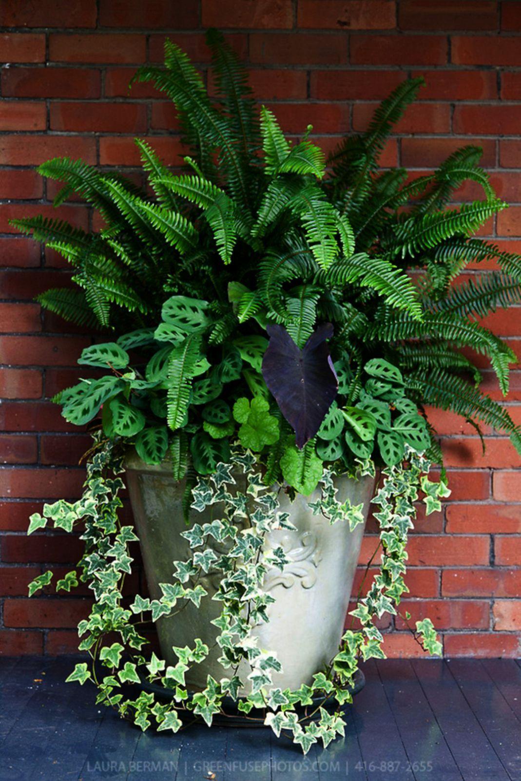 Landscape Gardening Glasgow Because Gardening And Landscape Design