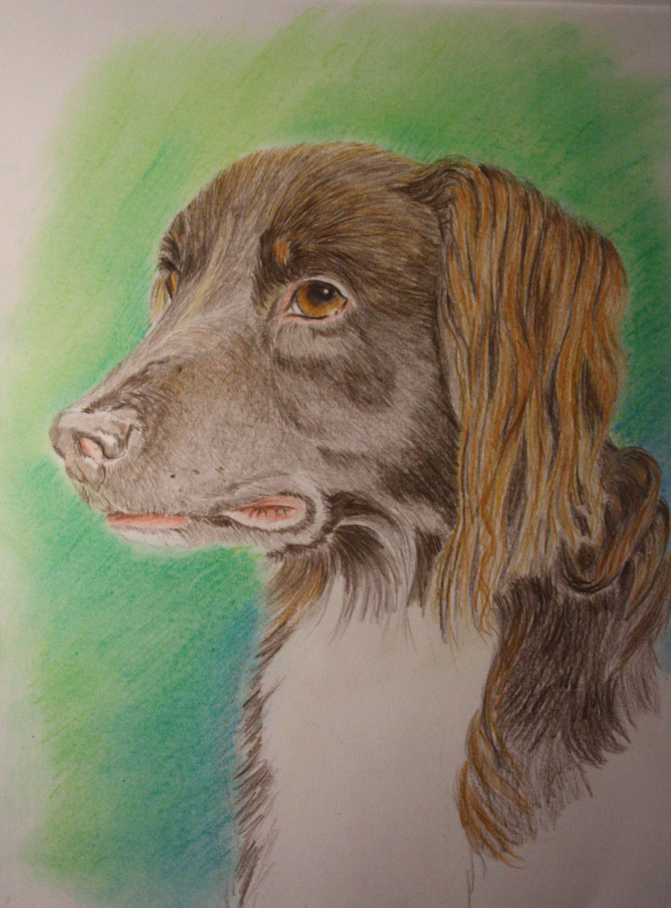 Jango, mijn eerste lieve hond die ik als puppy gekocht heb. Hij vond echt alles best. Hij was een makkelijke en lieve hond.
