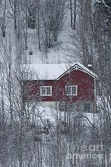 Red house in the forest #Photography #Snow #Art