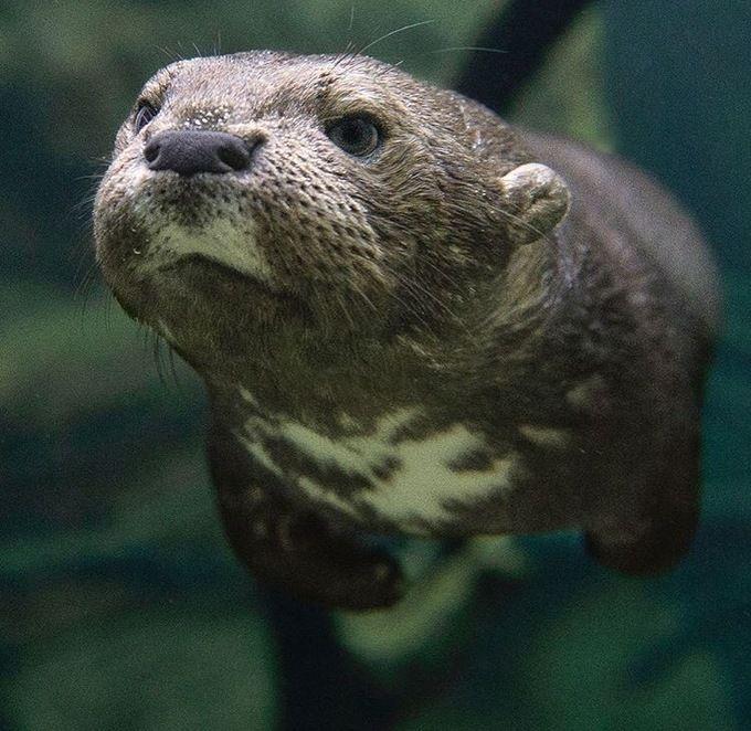 Happy World Otter Day bitches!