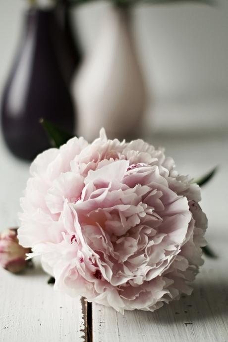 {Flower Day} Päonien in Altrosa