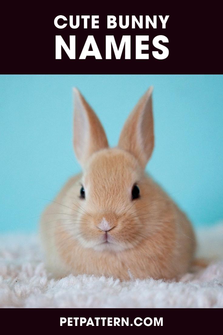 Cute Bunny Names Bunny Names Cute Bunny Bunny