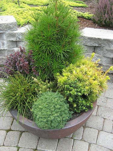 Tips for Planting Trees and Shrubs in Containers ...