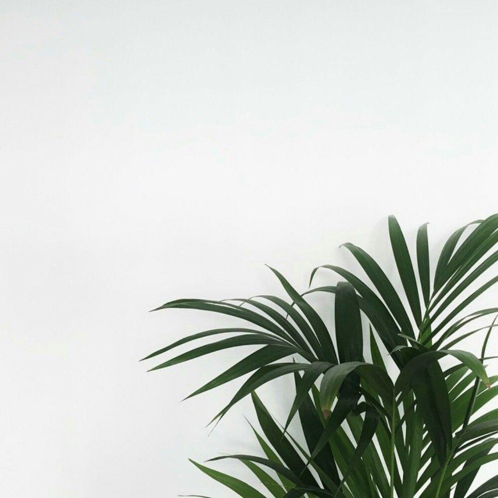 17+ Perfect Aesthetic Minimalist - Decortez | Plant ...