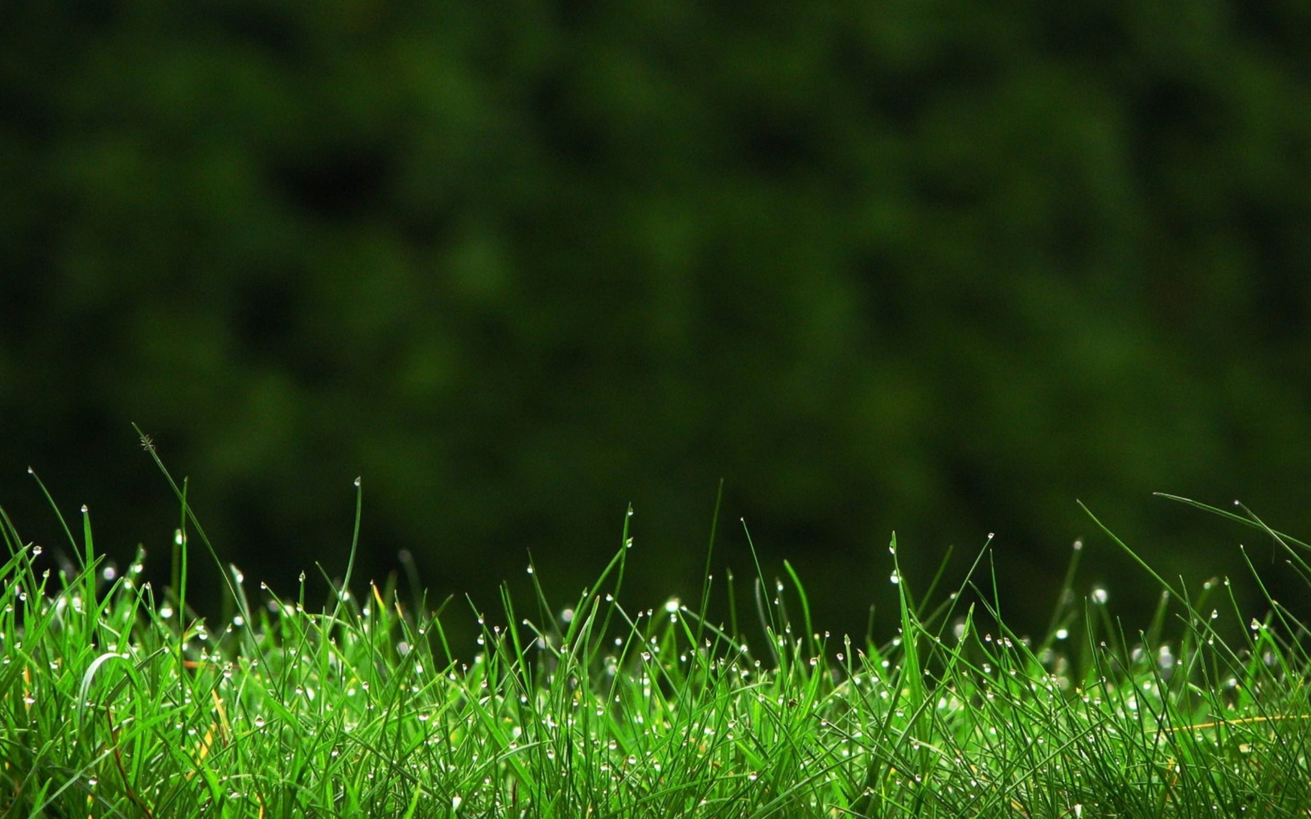 Green Grass Wallpaper Hd Download Grass Wallpaper Field Wallpaper Nature Wallpaper