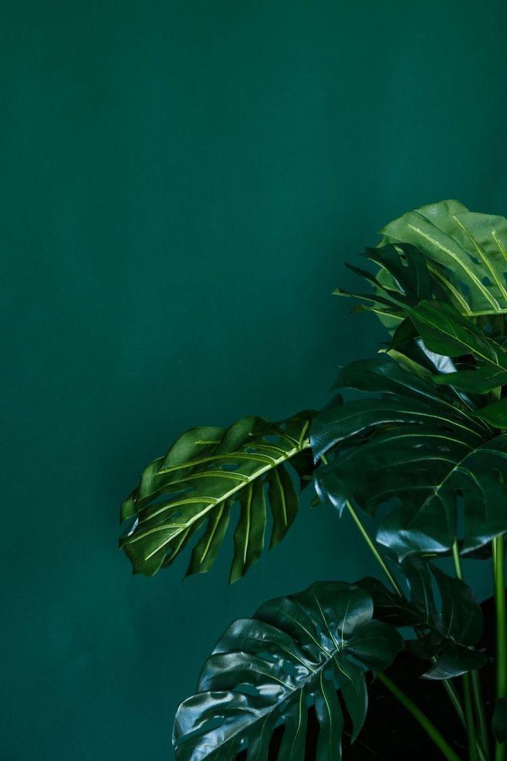 Sɴɪᴇɢᴅᴇᴊᴀ Dark Emerald Green Aesthetic In 2020 Green Wallpaper Green Aesthetic Green Pictures
