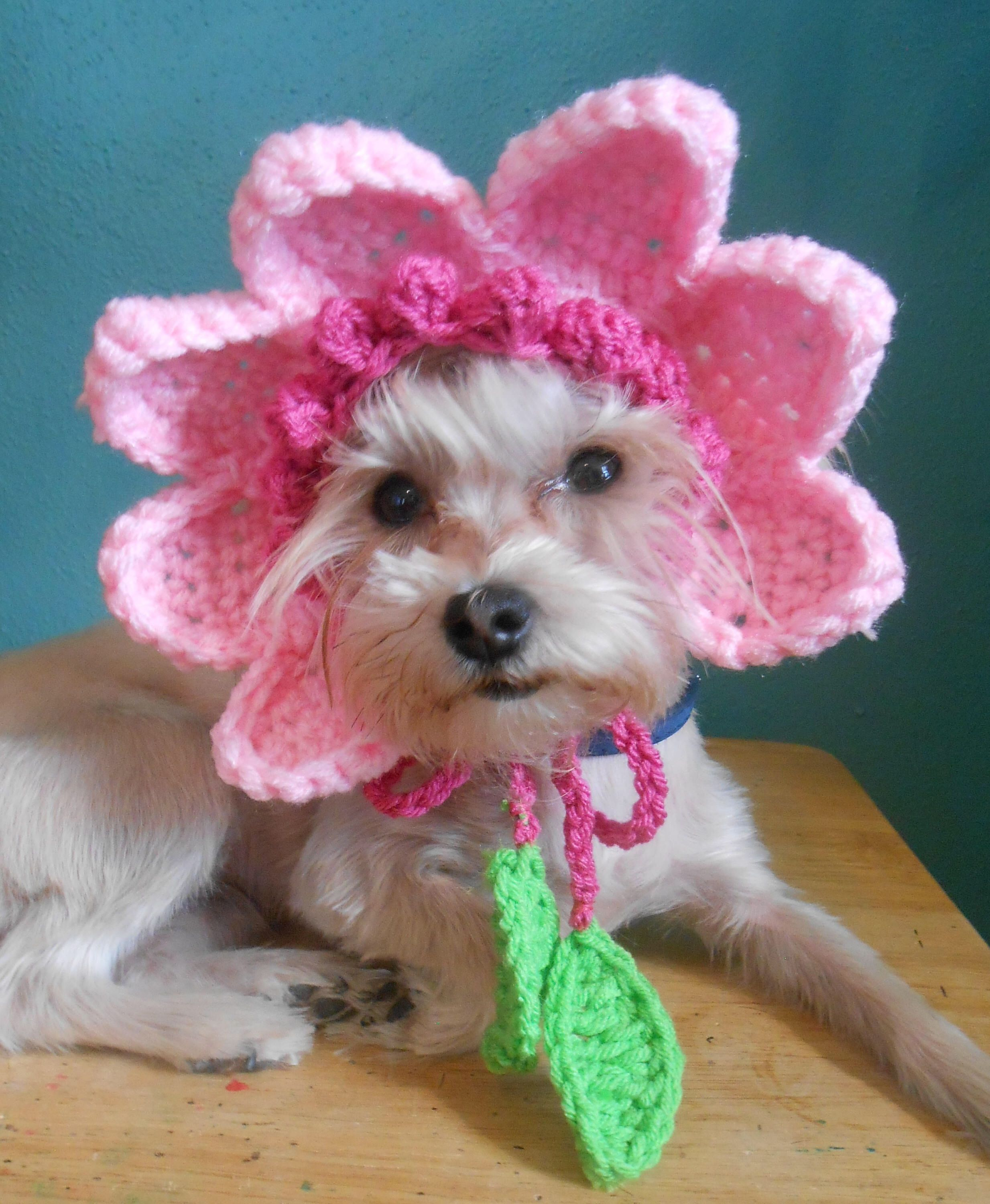 Crocheted Flower Hat for Dog or Cat, Pink Flower Hat for