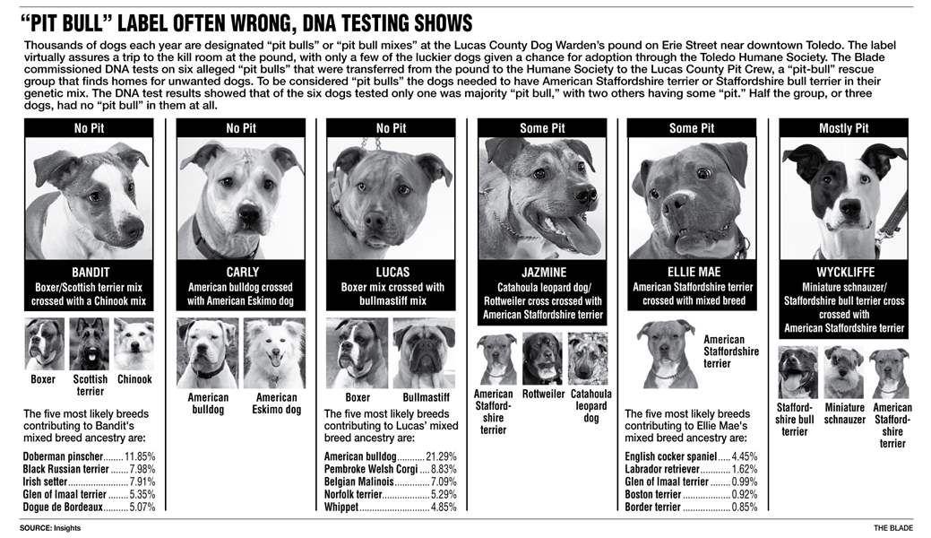 Many Dogs Mislabeled Pit Bulls Pitbulls Scary Dogs Dogs