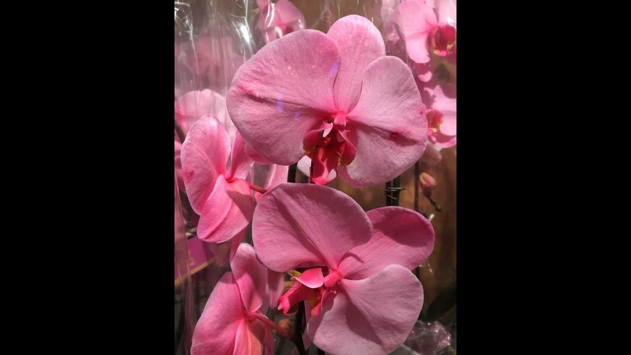 Beautiful exotic orchidscolorful tulips and flower bouquets beautiful exotic orchidscolorful tulips and flower bouquets exoticflowersbouquet izmirmasajfo