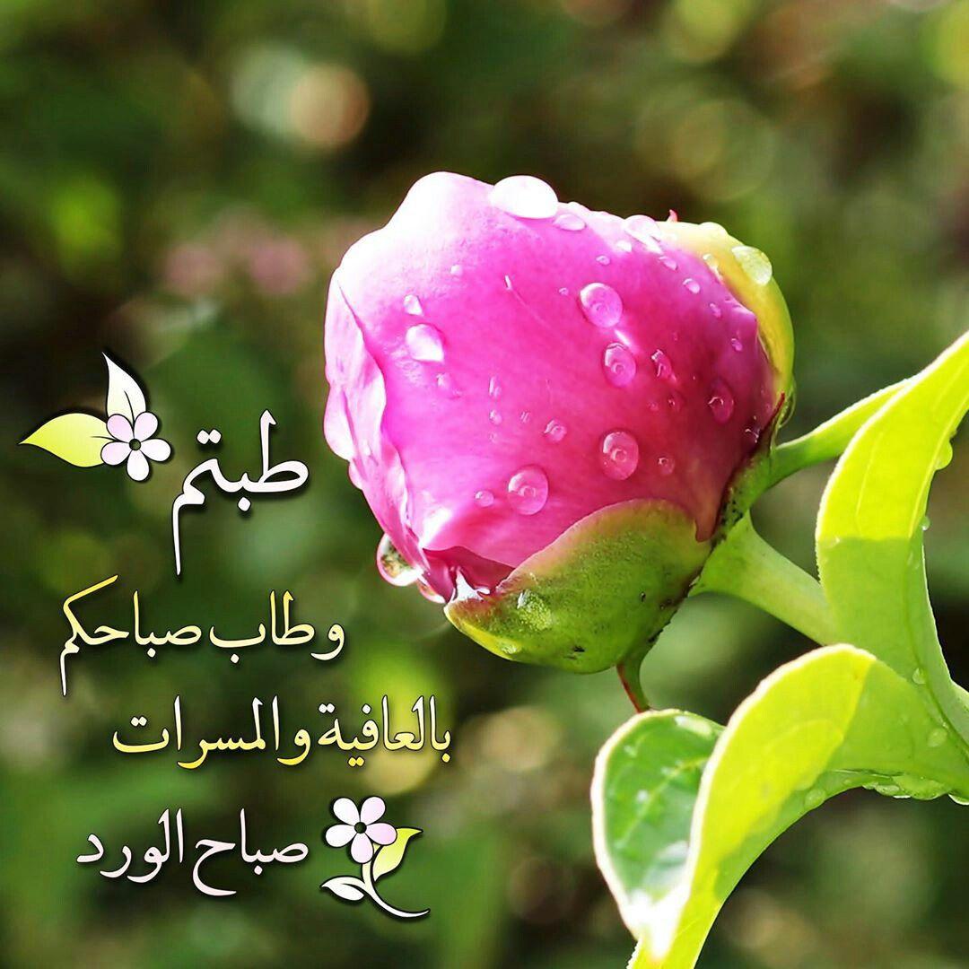 Pin By الصحبة الطيبة On صباحيات Good Morning Flowers Morning Flowers Watermelon