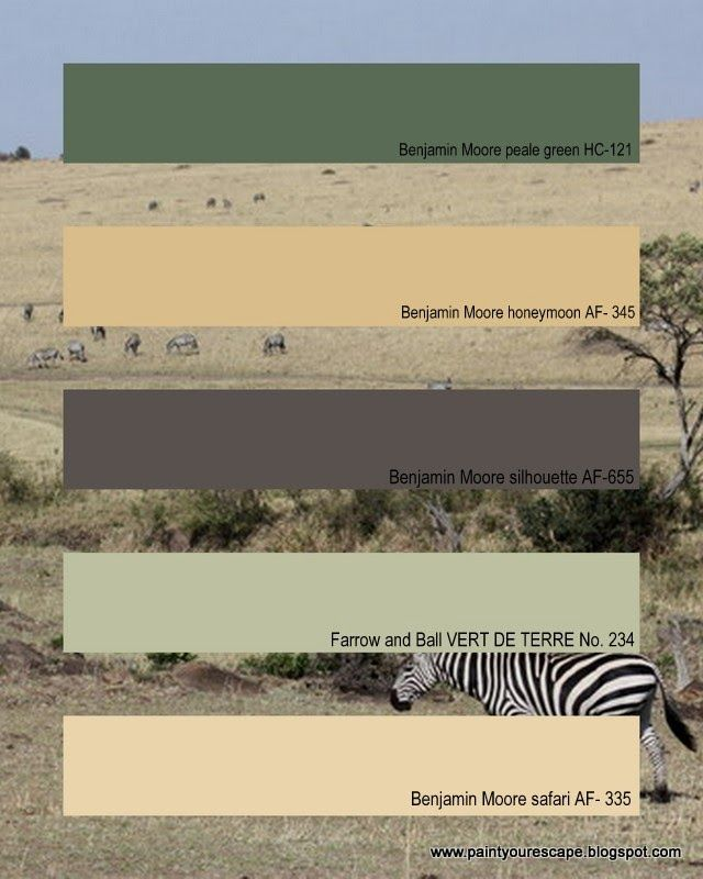 Paint Colors Inspired By An African Safari