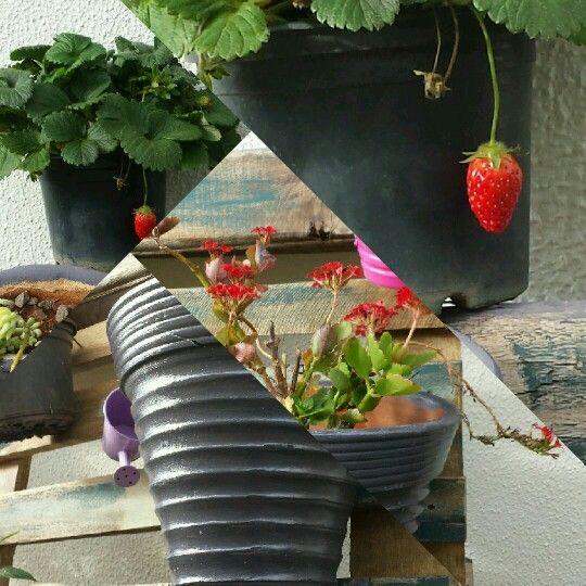 Cantinho de jardim