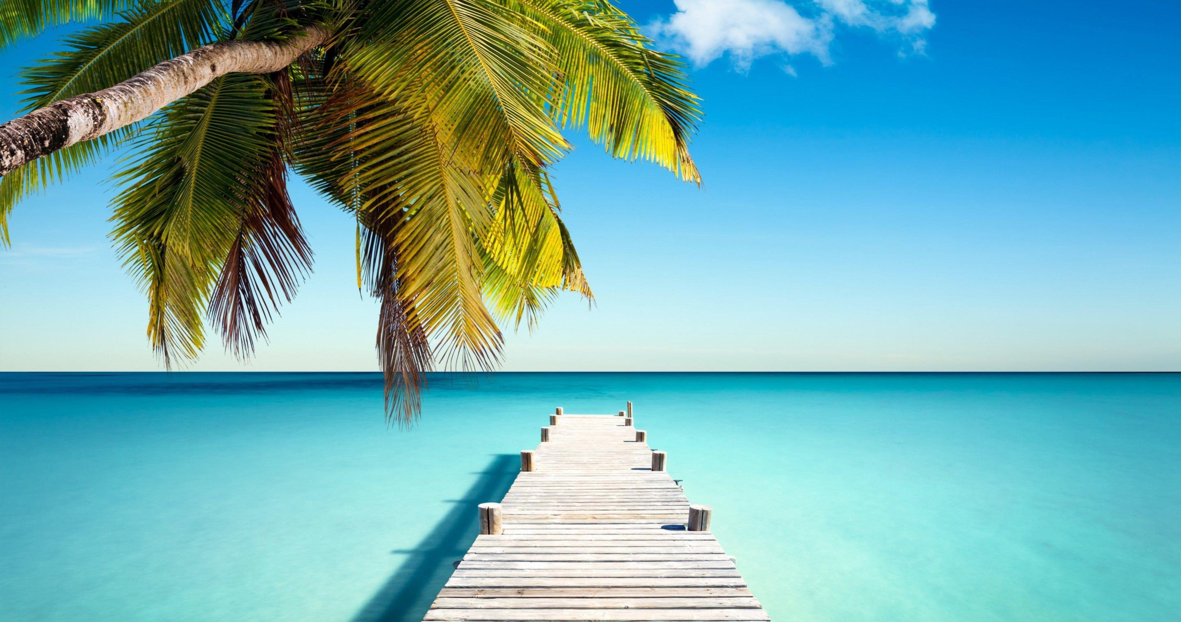 Tropical Paradise Beach 4k Hd Desktop Wallpaper For 4k: Tropical Paradise With Palm 4k Ultra Hd Wallpaper