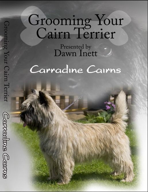 Carradine Cairns Home Page Grooming Dvd Cairn Terrier Terrier