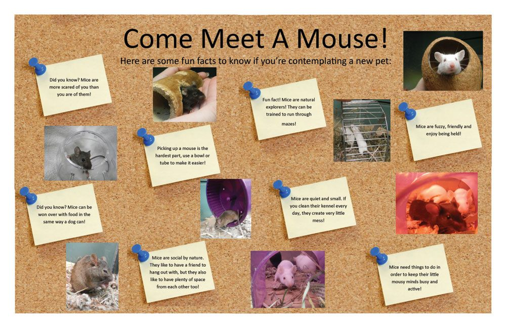 Did you know ohs also shelters pet mice in need of new